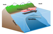 "This graphic shows how displaced surface waters are replaced by cold, nutrient-rich water that ""wells up"" from below."